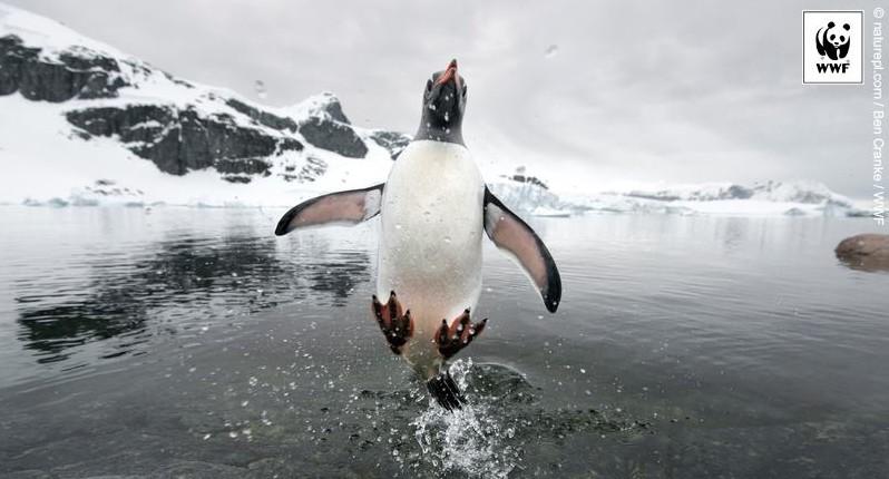 Ziua Pinguinilor