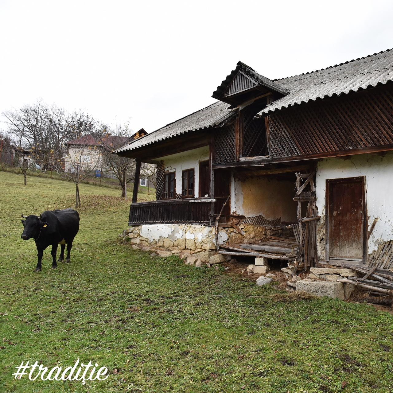 Povestea iei contemporane - Izabela Mandoiu 10